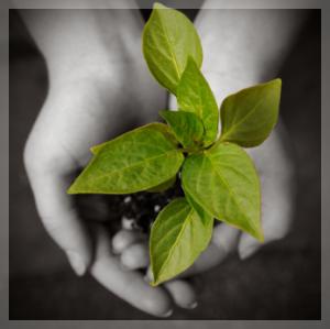 Vegan spirit for Plante qui pousse